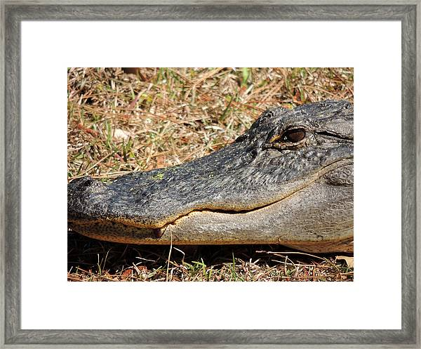 Heres Looking At You Framed Print