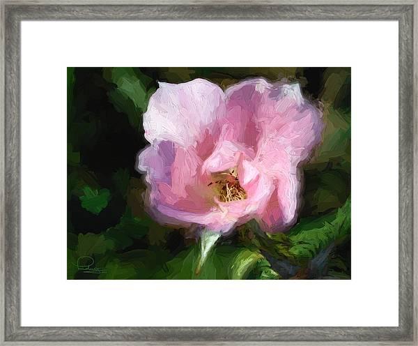 Heritage Rose Framed Print