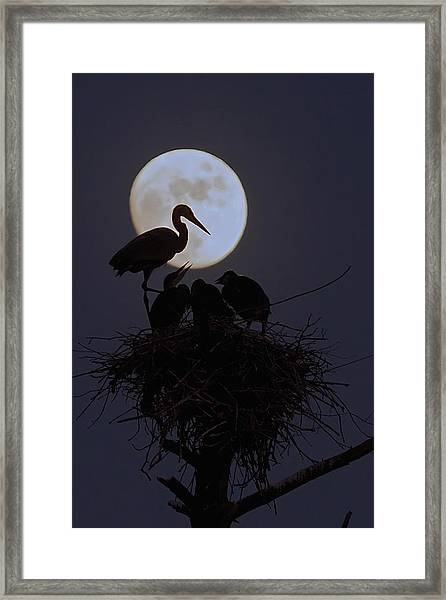 Heron Nest With Full Moon Framed Print