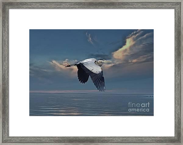 Heron Night Flight  Framed Print