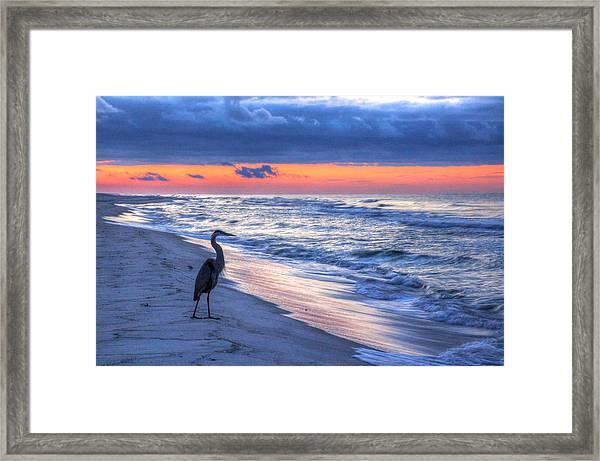 Heron On Mobile Beach Framed Print