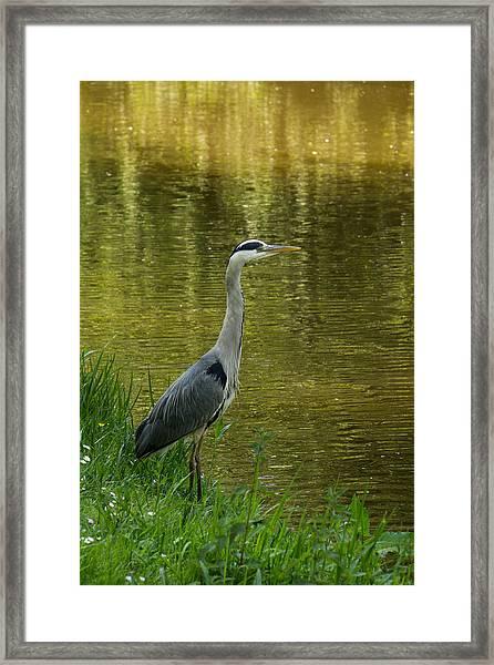 Heron Statue Framed Print