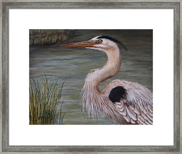 Heron Watching  Framed Print