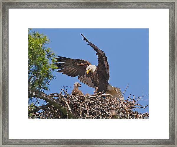 Hi Mom Framed Print