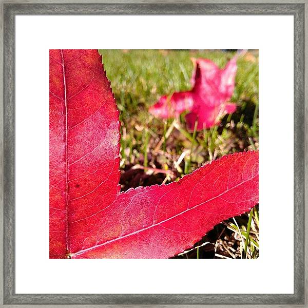 Hi. Wanna Play? Framed Print