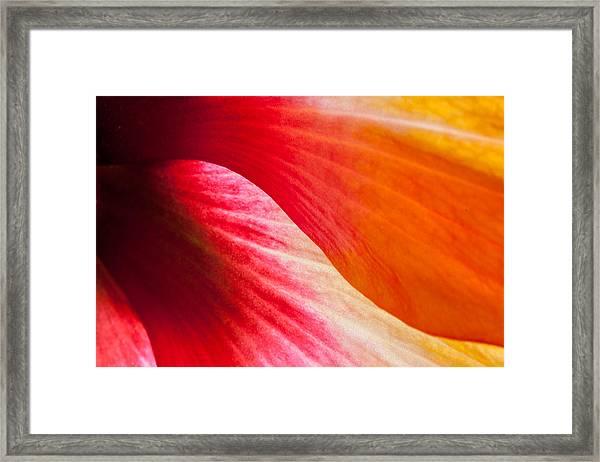 Hibiscus Curves Framed Print