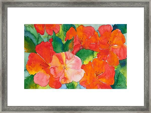 Hibiscus Flowers Framed Print