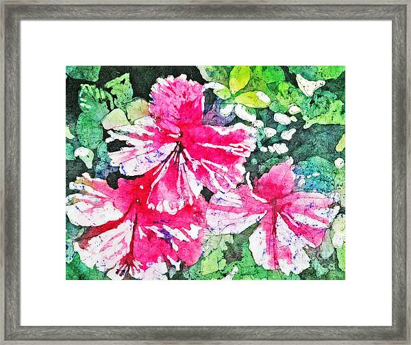 Hibiscus In The Sun Framed Print