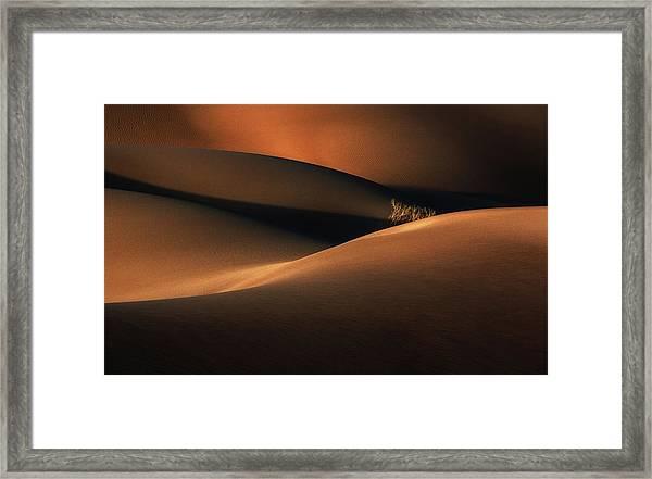Hidden Bush Framed Print