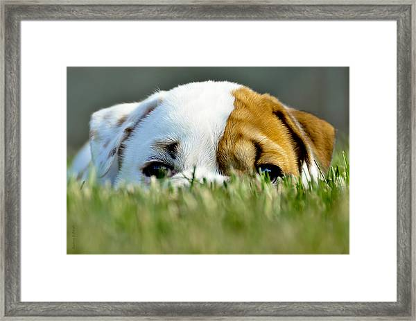 Hide And Seek Novice Framed Print