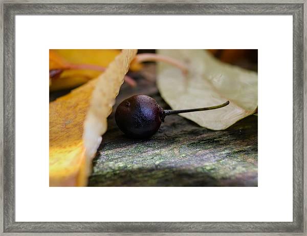 Hiding From Fall Framed Print