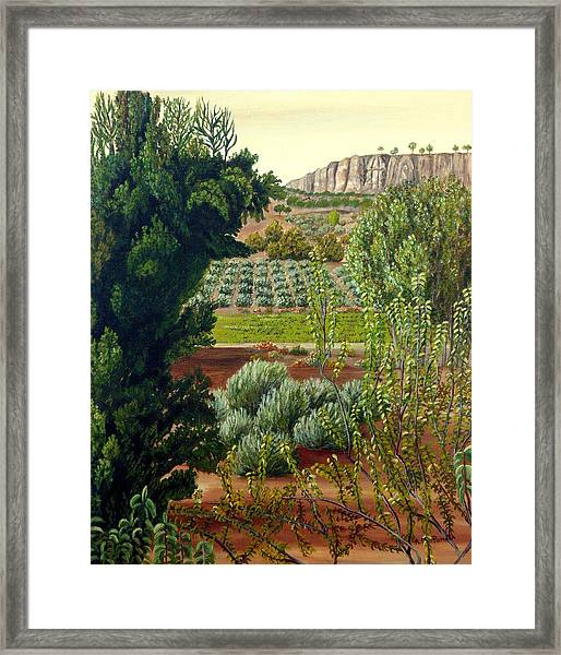 High Mountain Olive Trees  Framed Print