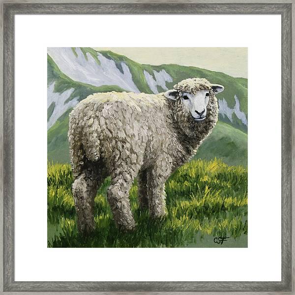Highland Ewe Framed Print
