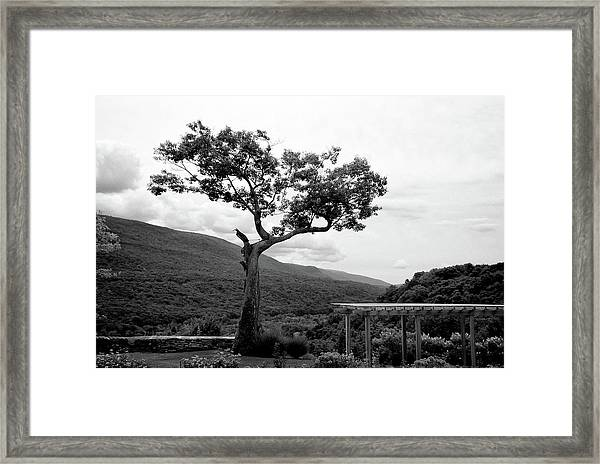 Hildene Tree 5689 Framed Print