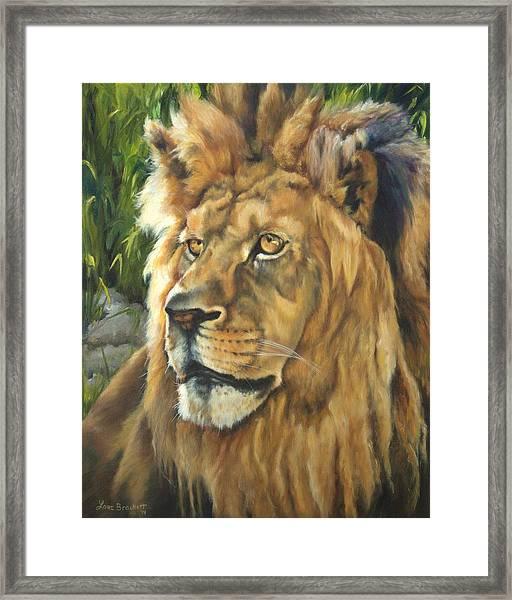Him - Lion Framed Print