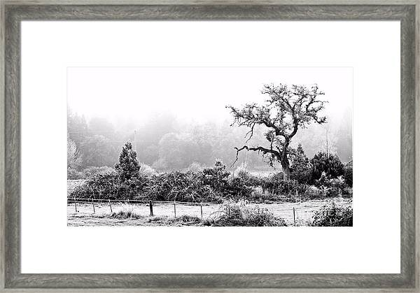 Hoar Frosted Island Framed Print