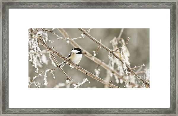 Hoarfrost Morning Framed Print