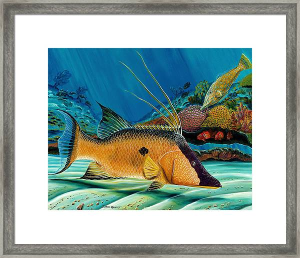 Hog And Filefish Framed Print