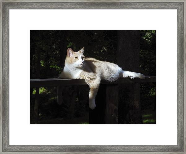 Holding Court Framed Print