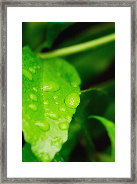 Holding Raindrops Framed Print