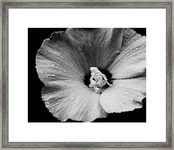 Hollyhock In Black And White Framed Print