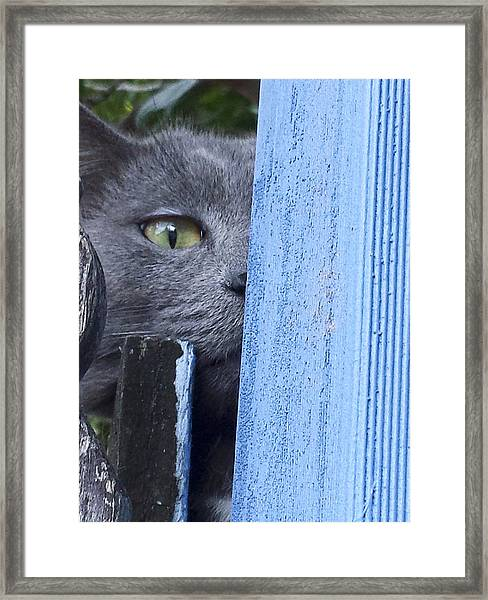 Framed Print featuring the photograph Home Alone by Debbie Cundy
