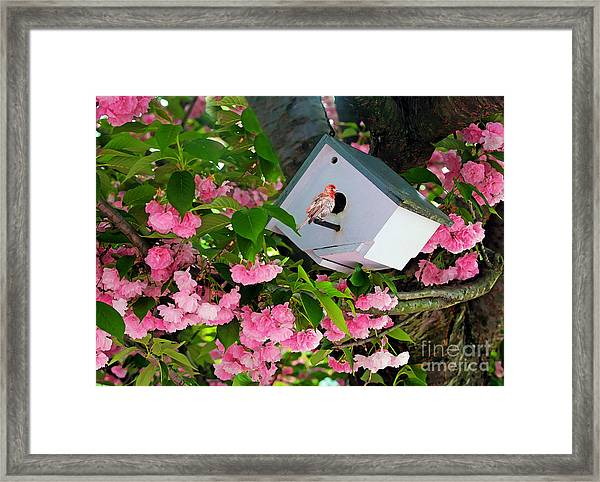 Home And Garden Framed Print