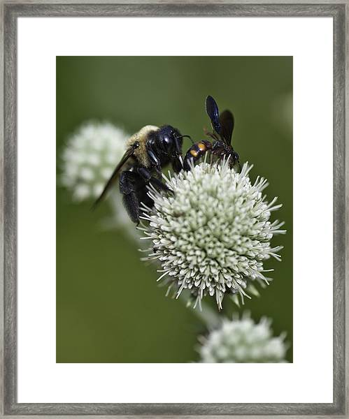 Honey Bee 0001 Framed Print