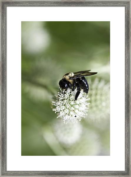 Honey Bee At Work Framed Print