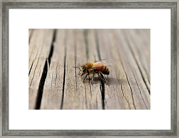 Honey Bee Beauty Shot Framed Print