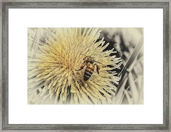 Honey Bee Meets Dandy Lion Framed Print
