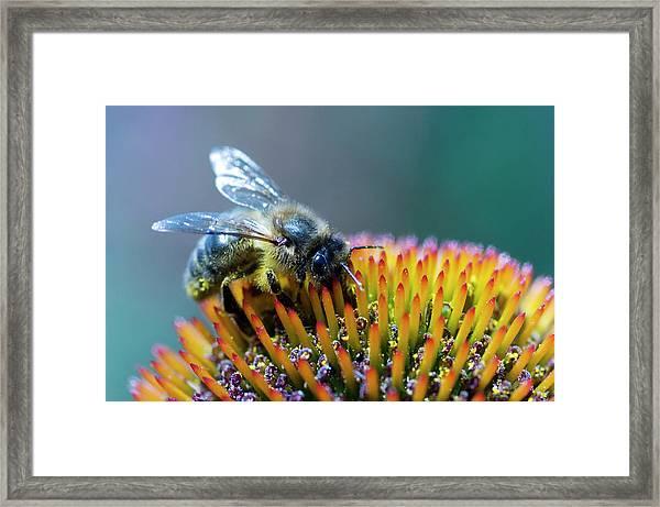 Honeybee On Flower Framed Print