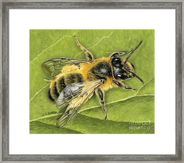 Honeybee On Leaf Framed Print
