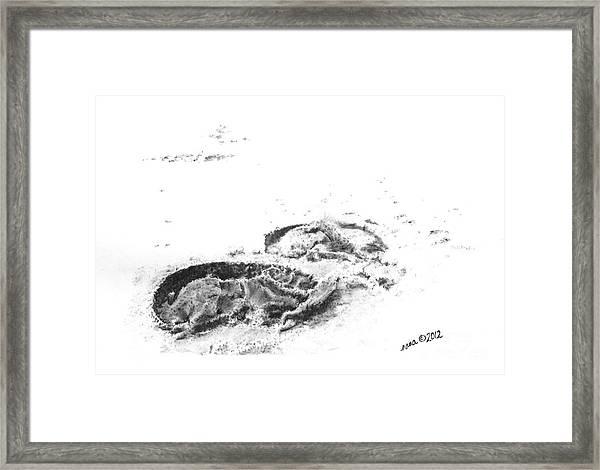 Hoof Prints Framed Print