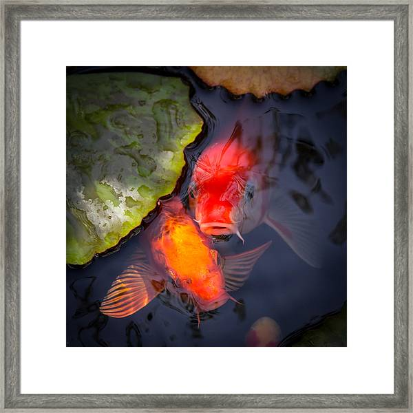 Framed Print featuring the photograph Hopeful Faces by Priya Ghose