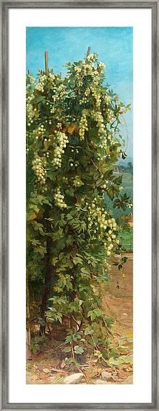 Hops 1882 Framed Print