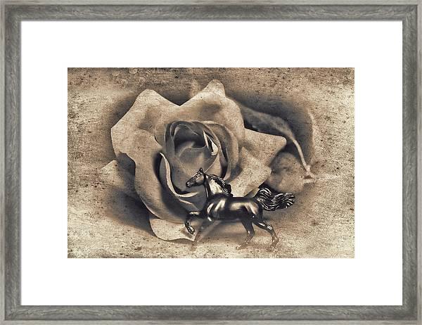 Horse And Rose Framed Print
