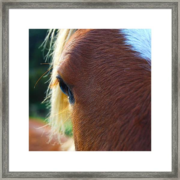Horse Close Up Framed Print