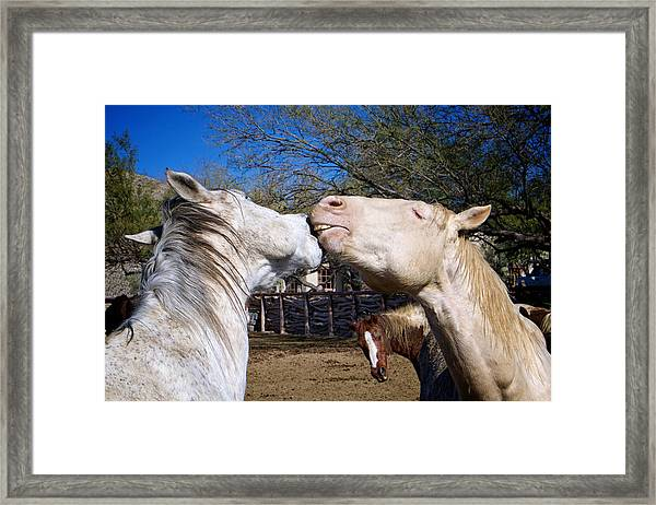 Horse Emotion Framed Print