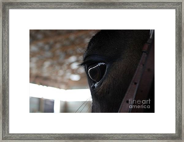 Horse Eye From Behind Framed Print
