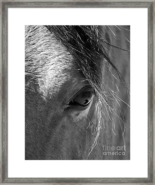 Horse Eye In Black And White Framed Print