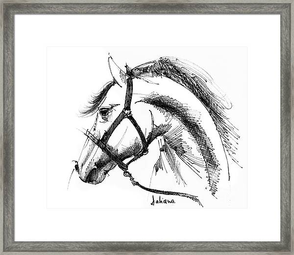 Horse Face Ink Sketch Drawing Framed Print