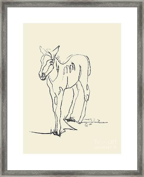 Horse- Foal -josje Framed Print