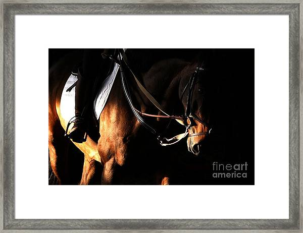 Horse In The Shade Framed Print