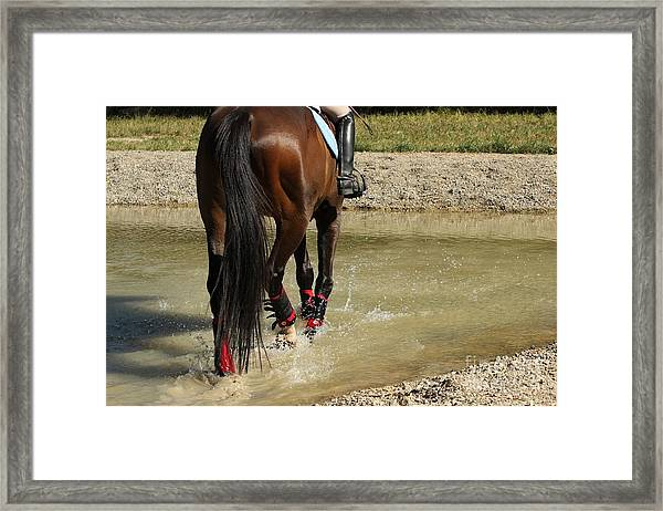 Horse In Water Framed Print