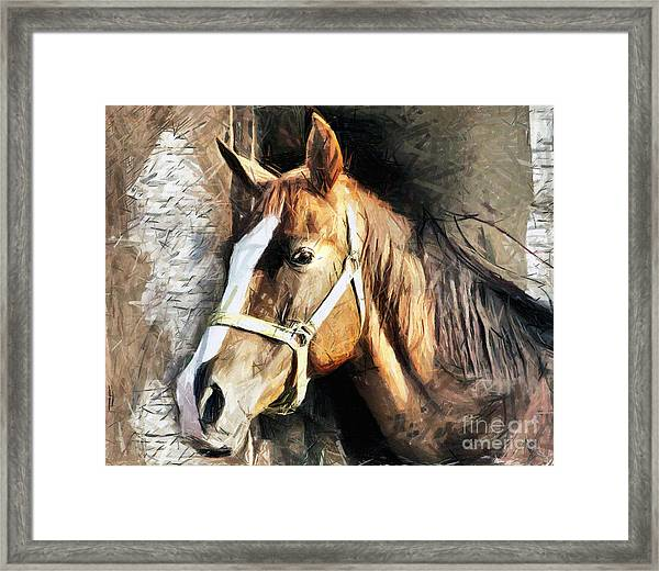 Horse Portrait - Drawing Framed Print