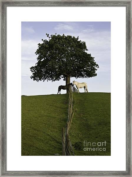 Horse Whisperers   Framed Print