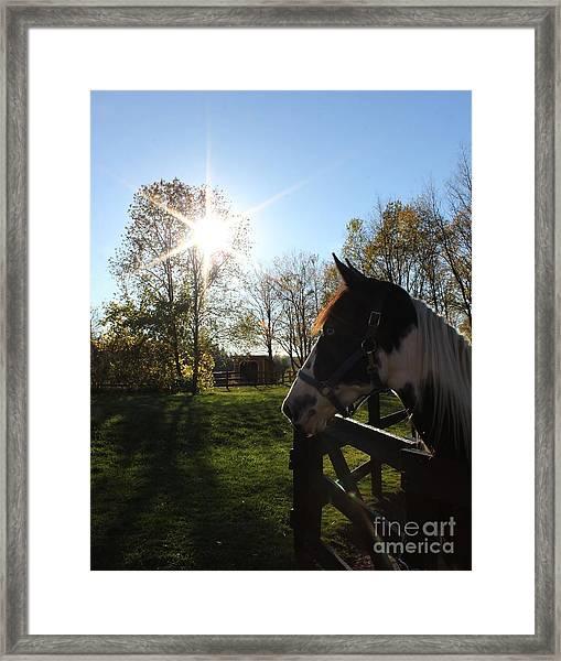 Horse With Sunburst Framed Print
