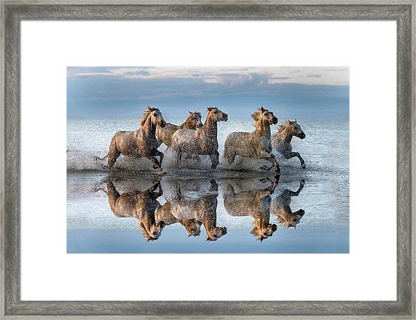 Horses And Reflection Framed Print by Xavier Ortega