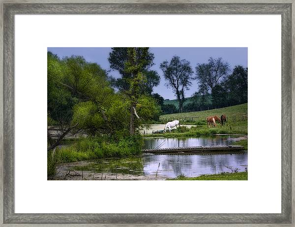 Horses Grazing At Water's Edge Framed Print